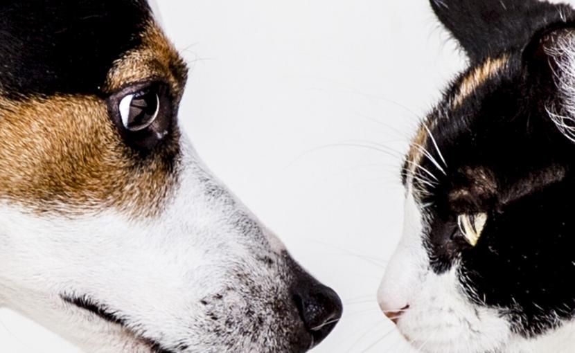 犬・猫の慢性腎臓病(CKD)